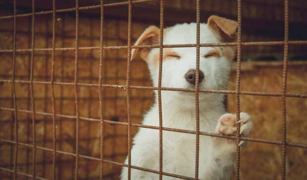Бездомных животных администрация Белгорода раздаёт с помощью ситибордов