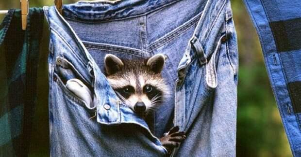 Хорошая новость от экспертов: ваши джинсы стирать ненужно!