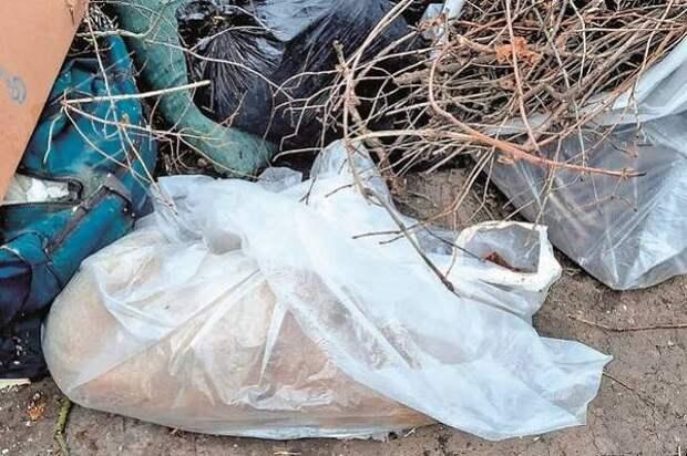 Зоозащитники в Лермонтове сообщили о массовом отравлении собак и кошек