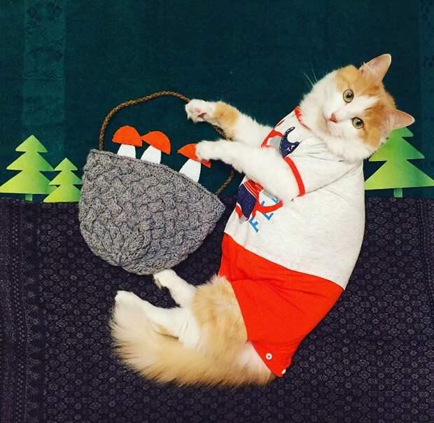 Познакомьтесь с Кузей, настоящим котом-путешественником из России