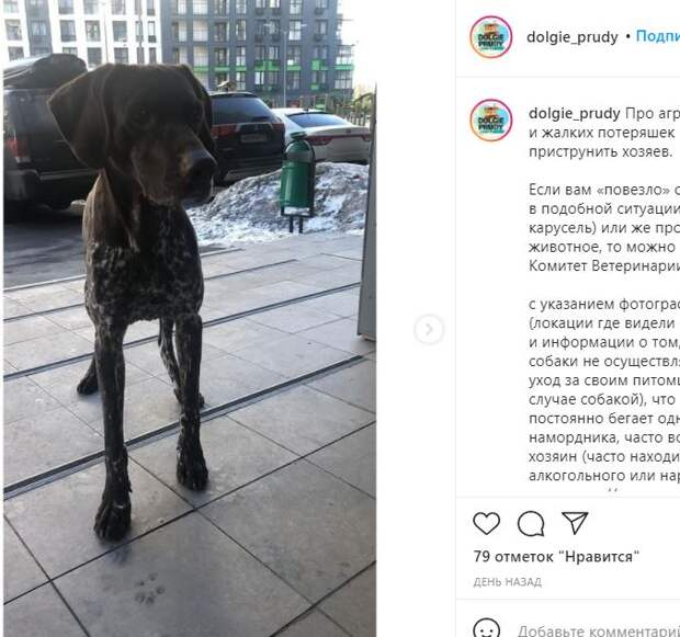 Породистый пес-беспризорник в Северном беспокоит соседей по району