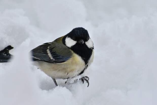 Мокрый снег и до +1 градуса ожидается в Удмуртии 20 января
