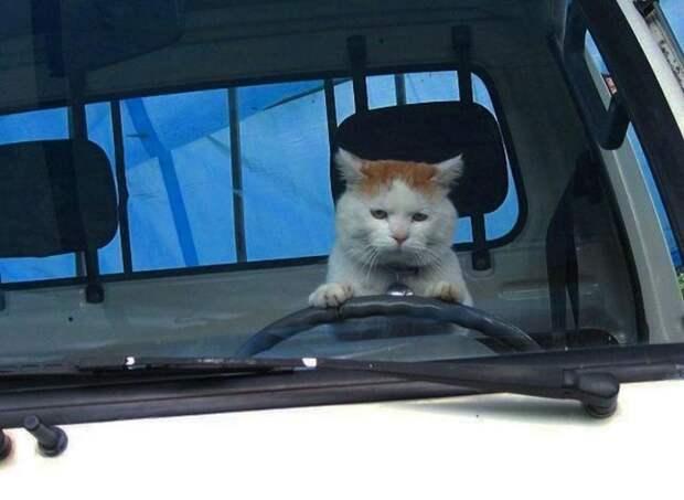 10 смешных фото котов в неожиданных ситуациях