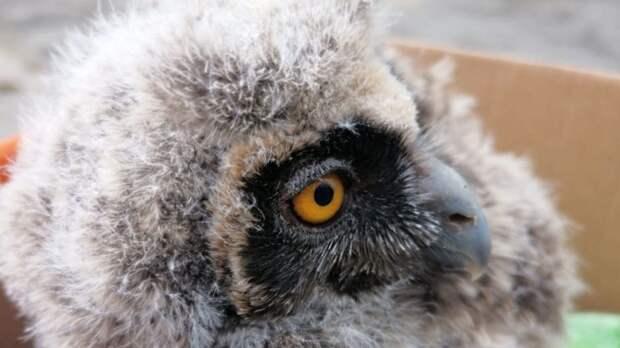 «Выпал из гнезда»: в приморском центре реабилитации животных новый пациент