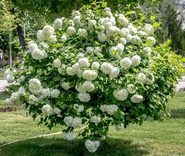 5 Красивых садовых цветов, которые не требуют большого ухода (Часть 1)