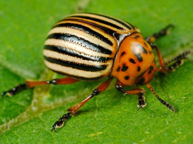 Исторические примеры использования насекомых для войны