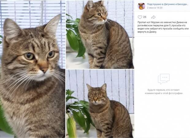 Фото дня: кот вернулся в химчистку в Рогачевском