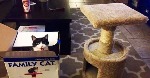 «Ты что мне подарил, хозяин?» Этим котам не угодишь…