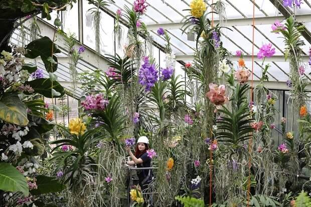 Фестиваль орхидей в Королевском Ботаническом саду