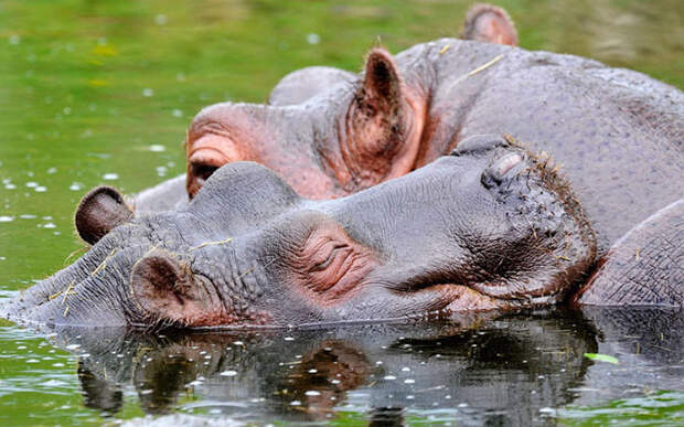 Жизнь животных из разных уголков мира