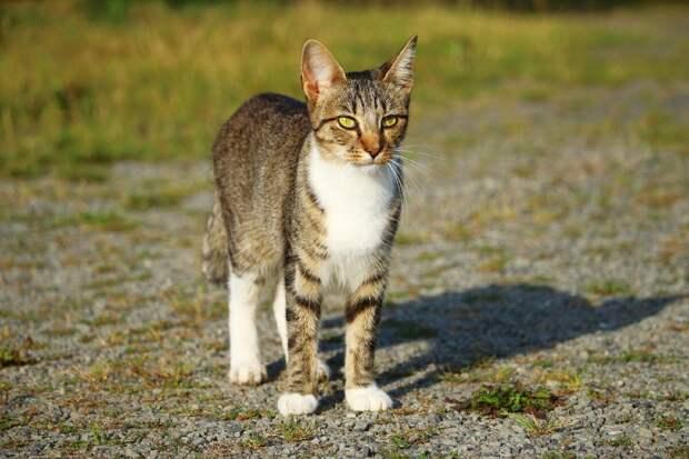 Кошка по имени Кошка..