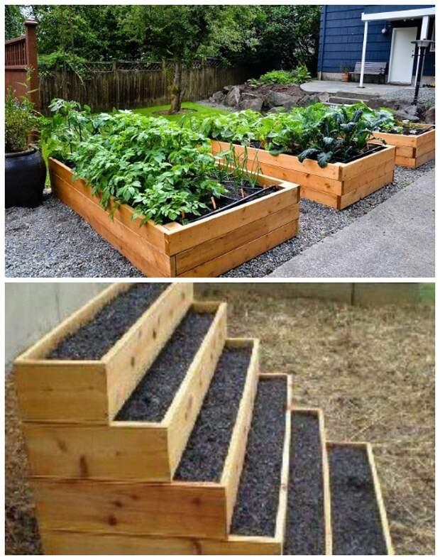 За такими грядками легко ухаживать и собирать урожай.