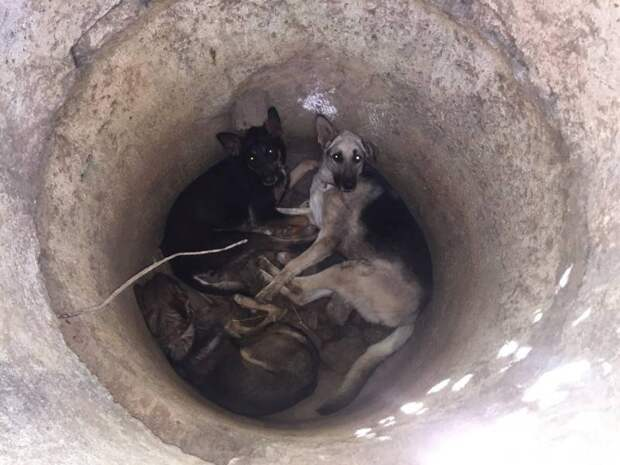 В Севастополе спасли трех истощенных собак, которых кто-то бросил в колодец