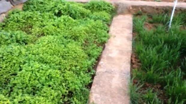 ГОТОВИМ ГРЯДКУ ВЕСНОЙ НА ЮГЕ / Органическое земледелие