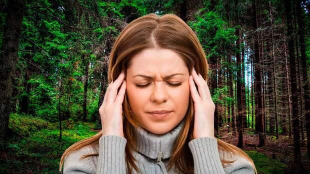 Симптомы заражения после укуса клеща перечислила эпидемиолог