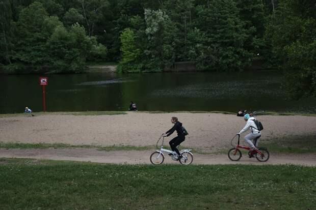 Дорожки в Кузьминском парке заасфальтируют в ноябре