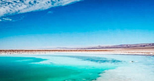 Жизнь в пустыне Атакама.