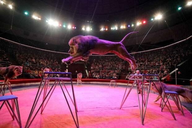 Депутат назвал посетителей цирков с животными «гуманоидами»