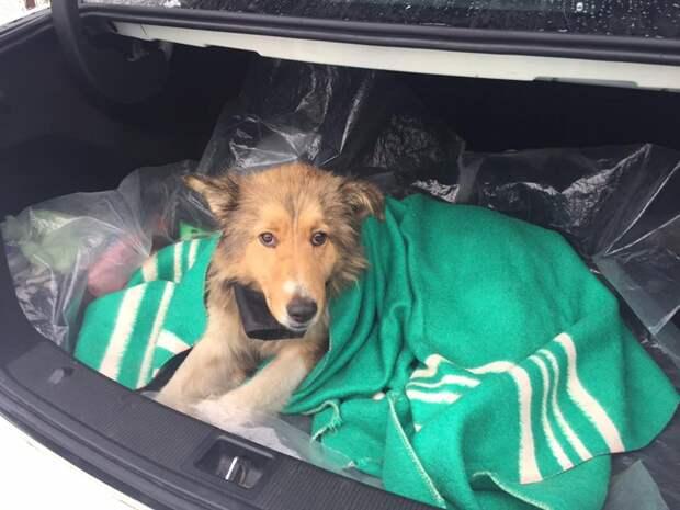 Пес два дня защищал раненую собаку от поезда, ложась на рельсы рядом с ней