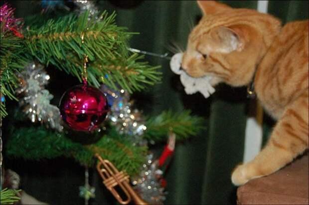 Охраняем елку от домашних животных и наоборот: советы ветеринаров