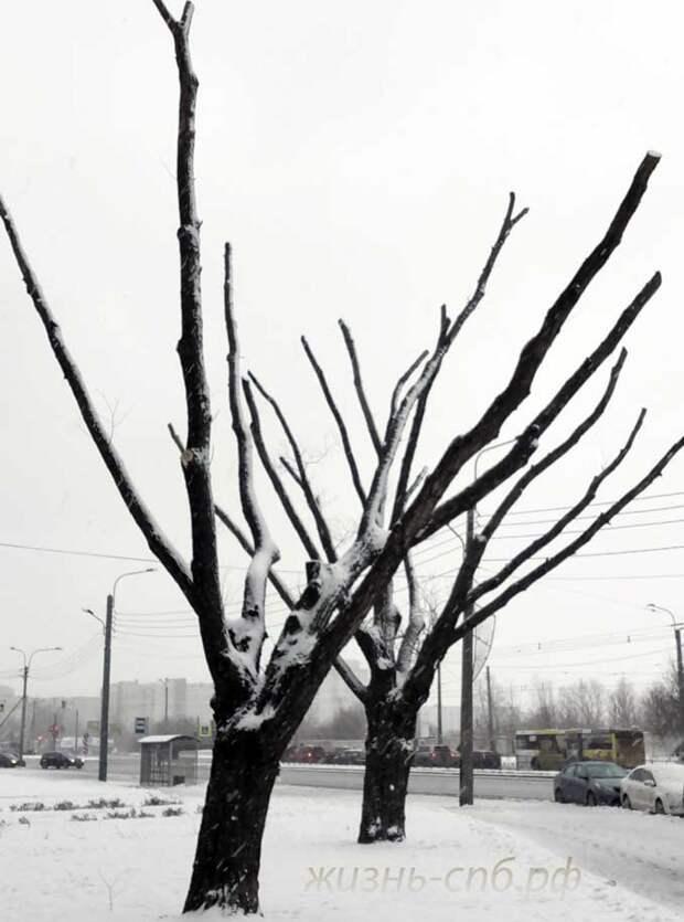 Русский лес глазами наших чиновников