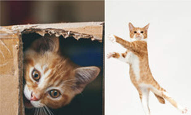 Как воспитать кота: рассказывает сотрудник кошачьего приюта