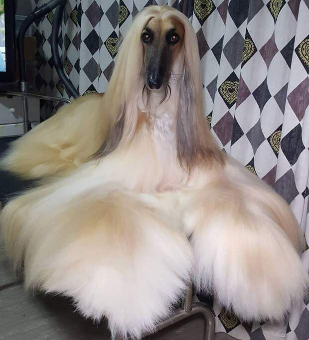 10 фото пушистых домашних животных, в которых хочется укутаться