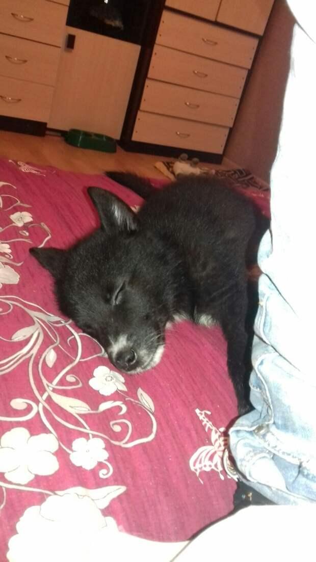 Неизвестные ночью перекинули через забор приюта беззащитных щенят забор, приют, собака, щенок