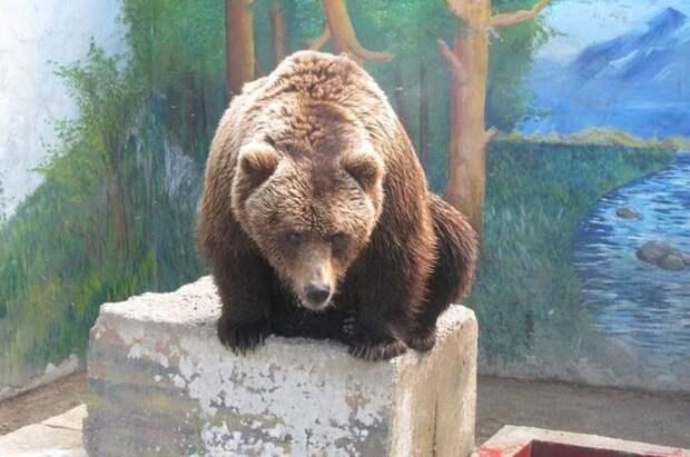 В зоопарке Симферополя появились дополнительные ограждения для животных