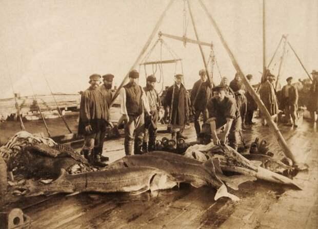 Азовское море: что с ним не так