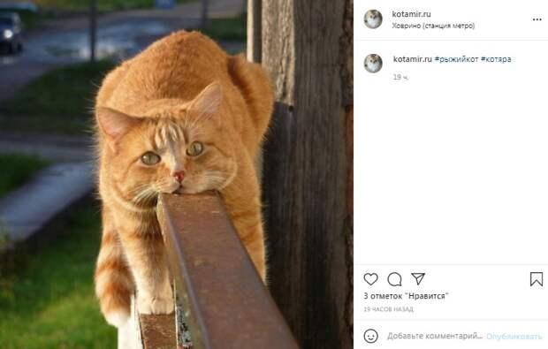 Фото дня: рыжий кот у станции «Ховрино» в поисках прохлады