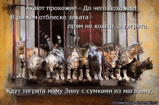 1474017242_kotomatricy-24