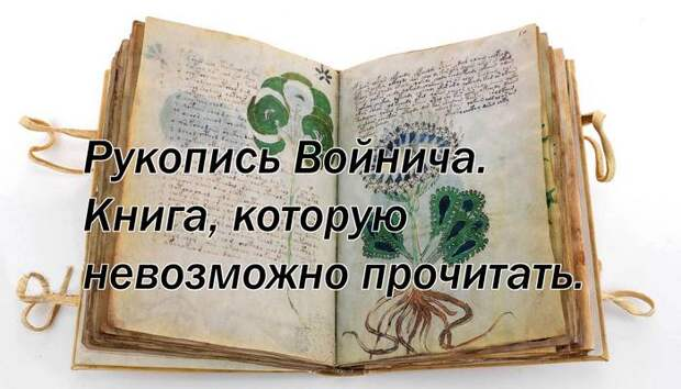 Рукопись Войнича. Книга, которую невозможно прочитать.