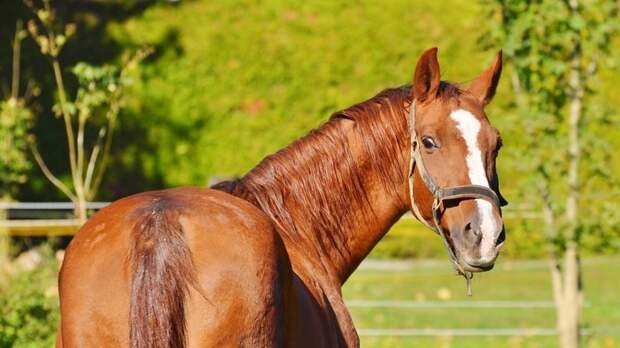 Запряженная в телегу лошадь врезалась в толпу людей в Татарстане
