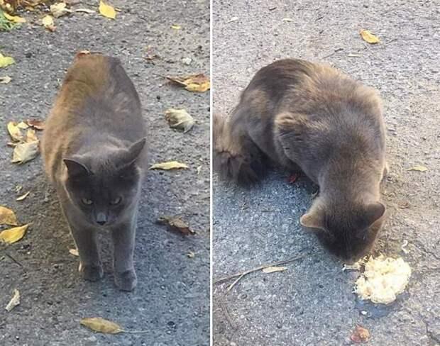 Молоденькая кошка позаботилась о себе и сестре – они обе очень устали жить на улице