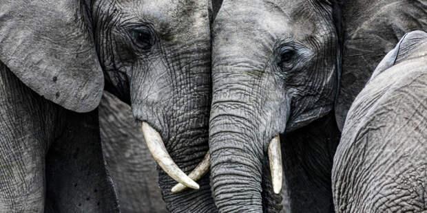 Право на свободу: американский суд получил иск от слонихи
