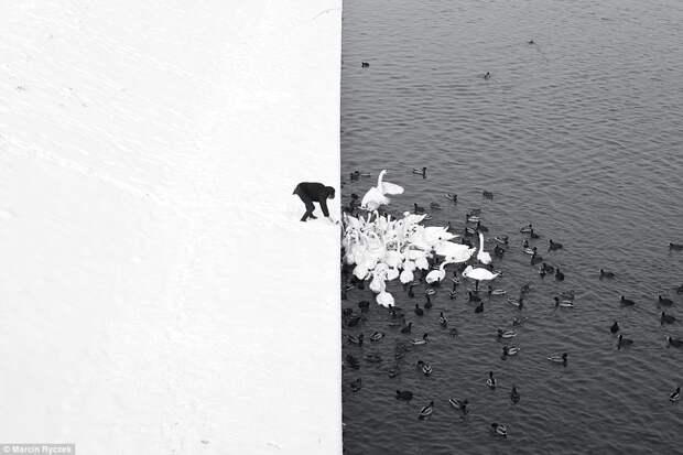 Лебеди и утки