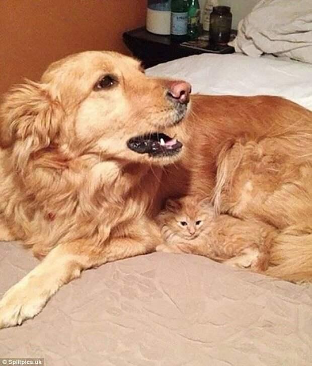 4. Найди кота домашние животные, коты, кошки, маскировка, маскируется, прятки, смешные кошки