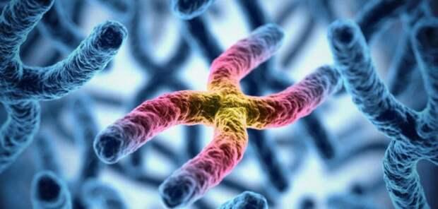 """Специалистам из США удалось подавить """"бессмертие"""" в злокачественных клетках"""