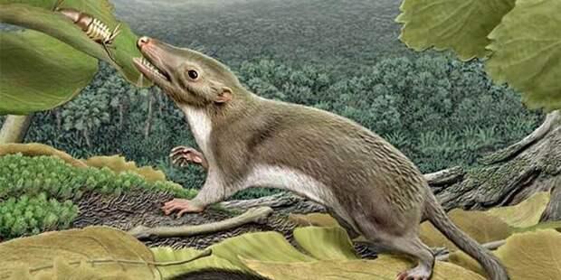 От свиньи до динозавра: кого наши предки победили в борьбе за выживание антропология, динозавры, естественный отбор, кошки, человек, эволюция