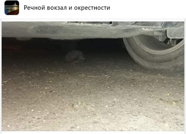 На Ленинградском шоссе был найден ручной еж