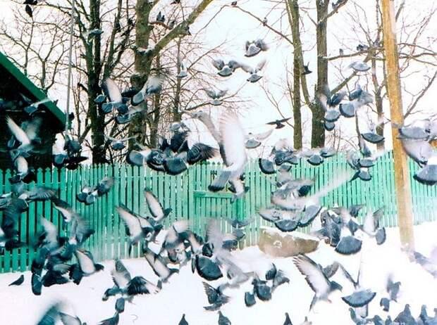 Домик Батюшки. Фото З.Белозеровой