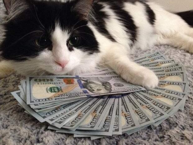 Богатый котик