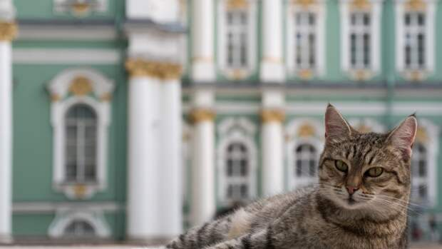 Жители и гости Петербурга смогут бесплатно посетить Эрмитаж 18 и 20 мая