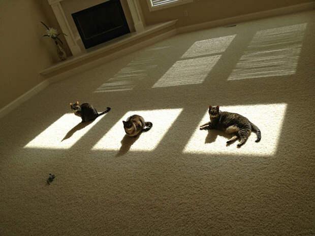 Каждому - по идеальному местечку животные, котики, лучи, погреться, солнечные ванны, солнце, температура, тепло