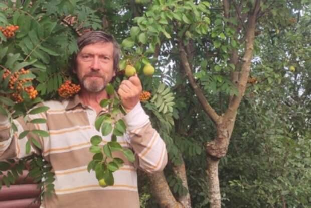 Дачник из Лосинки собирает с одного дерева урожай груш и рябины