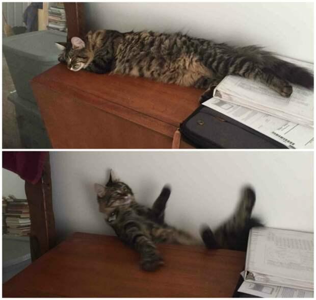 Кошачий пот от Михалыча! Улыбаемся вместе!