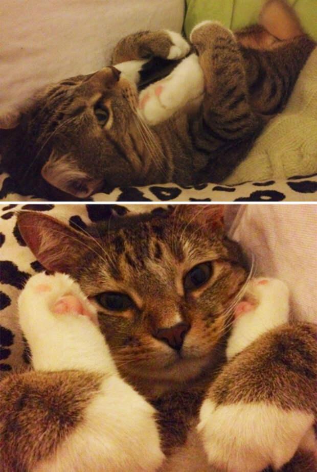 Кошачья йога.