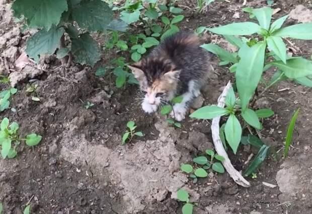 Тонущий котенок звал на помощь, забравшись на камень