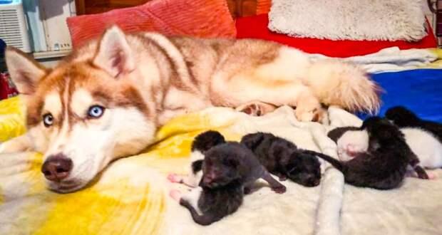 Собака спасла от гибели семь маленьких котят